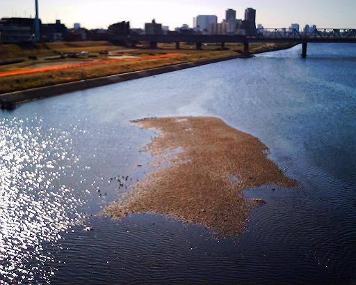 [Photo] 朝の多摩川