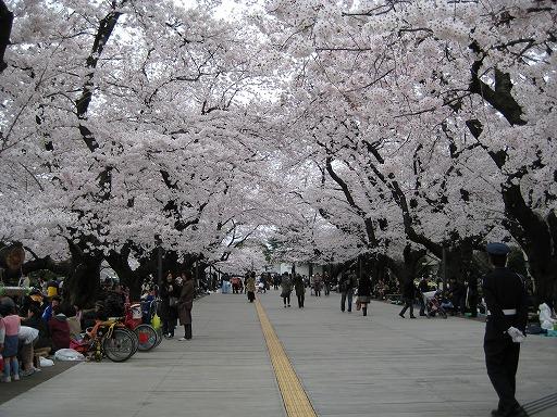 某大学の桜