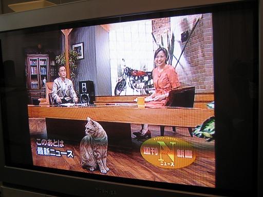 ネコちゃんがウロウロするニュース番組「週間ニュース新書」