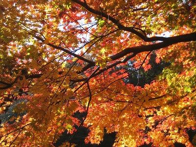 2008紅葉の鎌倉