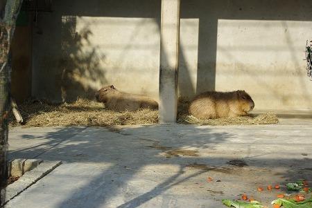 20081220_tobu_zoopark038_s.jpg
