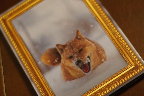 レオナルド犬プリオ / 電気グルーヴ