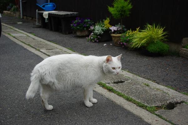 20090506_kagawa_118_s.jpg