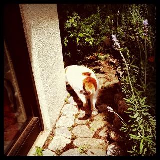 森と芸術@東京都庭園美術館