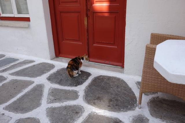 ミコノス島のネコ