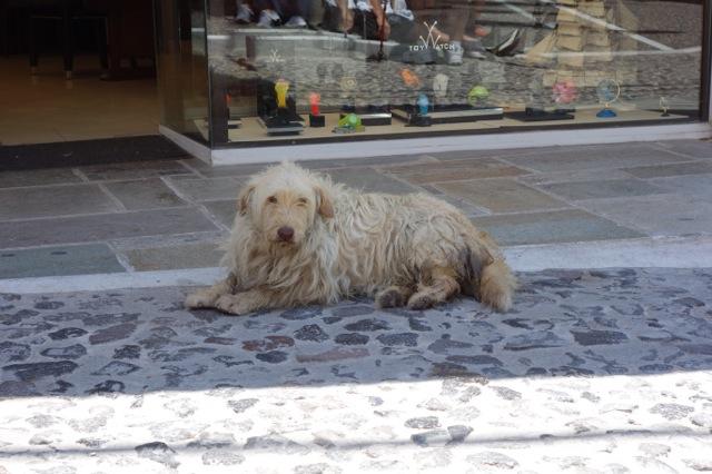 サントリーニ島フィラの犬
