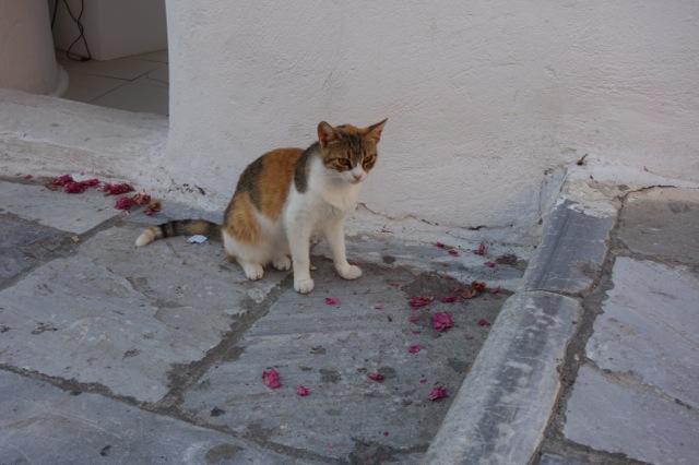 サントリーニ島イアの猫
