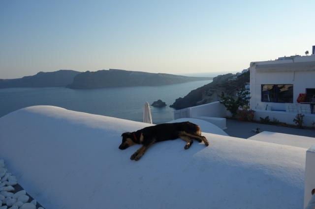 サントリーニ島イアの犬