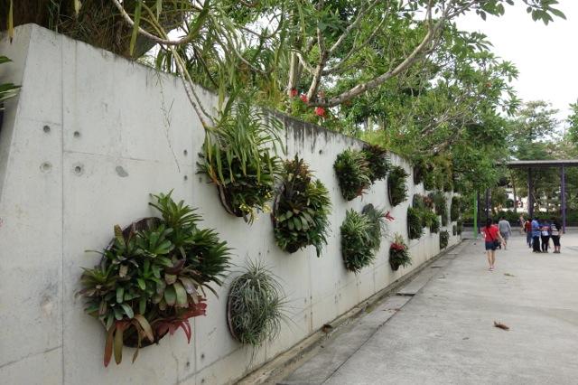 壁から植物