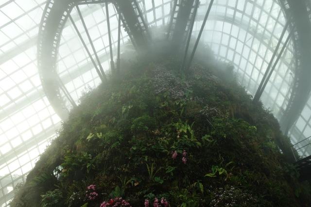 クラウドフォレストの霧
