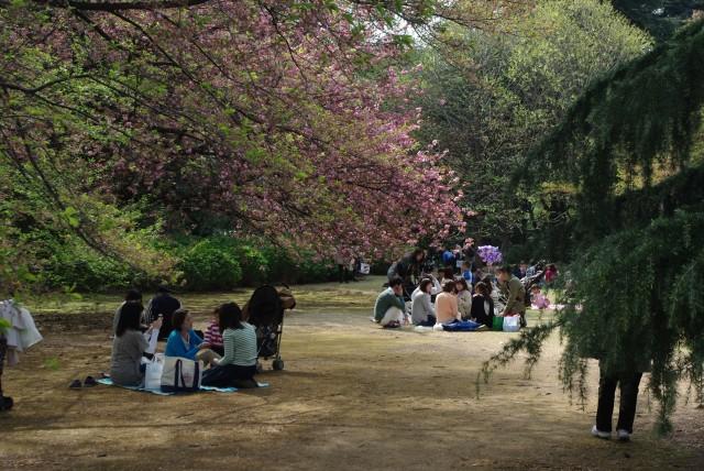 新宿御苑_ピクニック