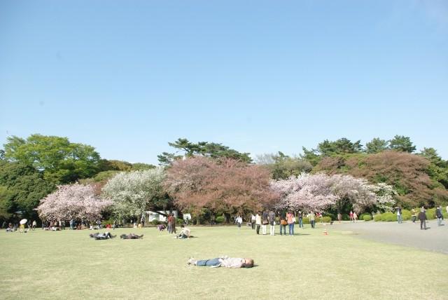 新宿御苑_桜