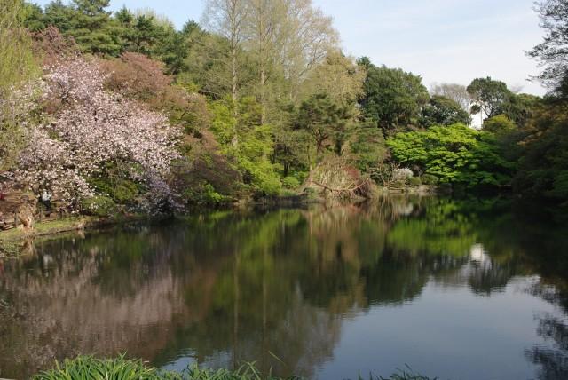 新宿御苑_池に映る風景