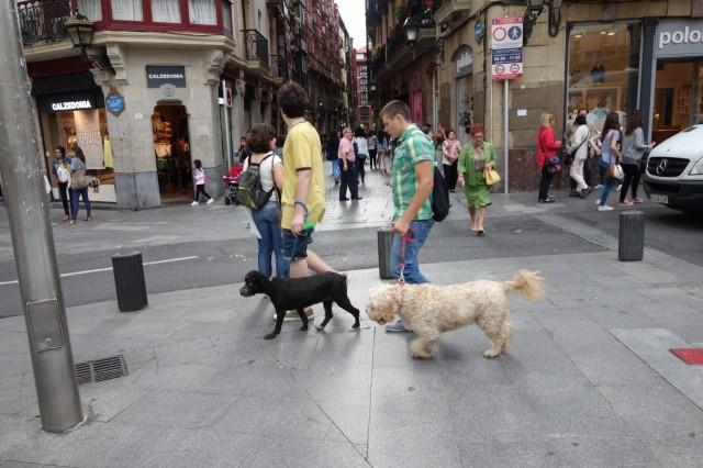 ビルバオの散歩犬