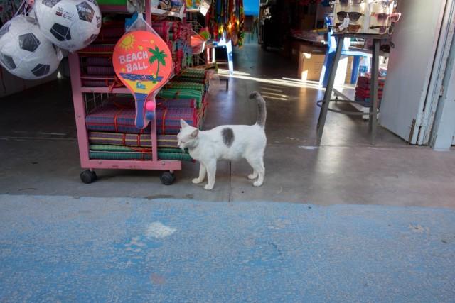 お店のネコちゃん