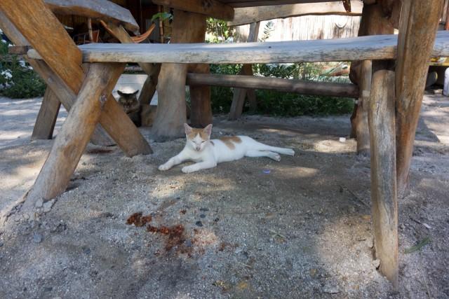 木陰で休むネコちゃん