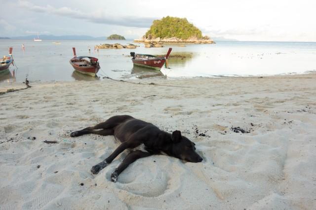 砂浜で寝るワンちゃん