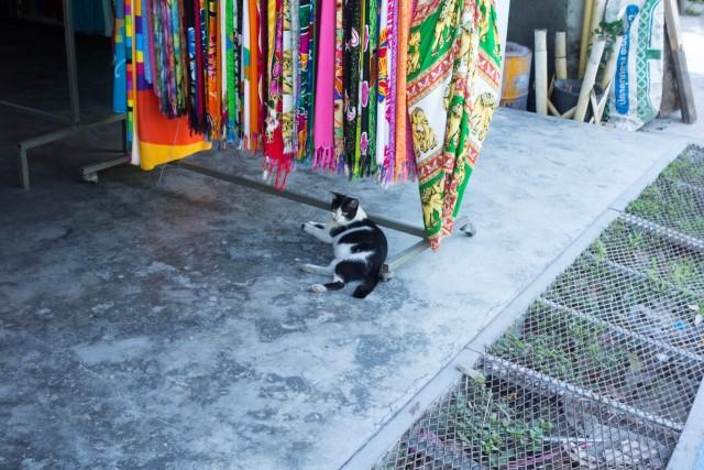 服屋のネコちゃん