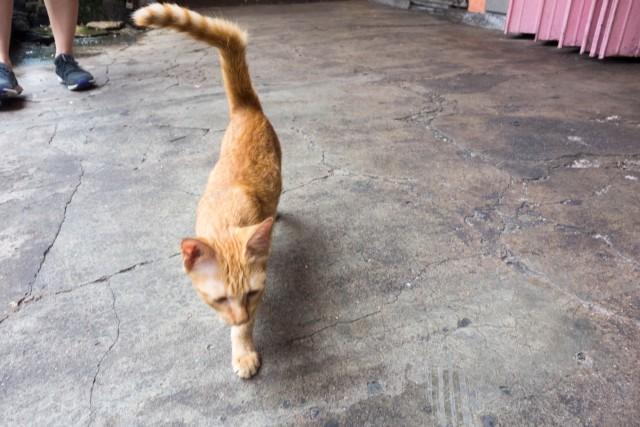 クアラルンプールのネコちゃん1