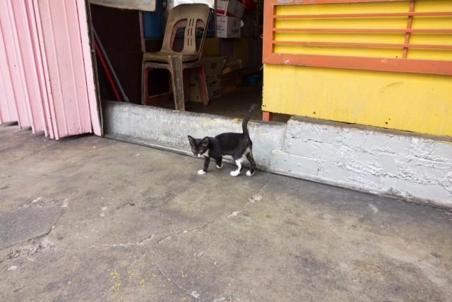 クアラルンプールのネコちゃん2