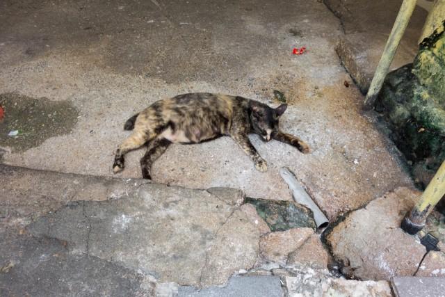 クアラルンプールのネコちゃん3