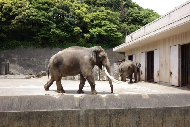 インド象のボンくんとヨーコさん