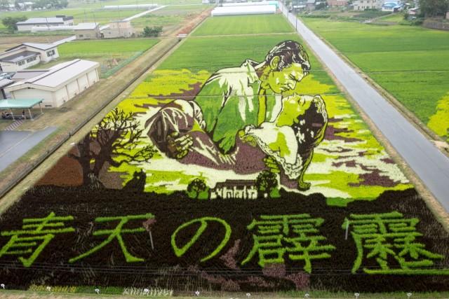田んぼアート2015青天の霹靂
