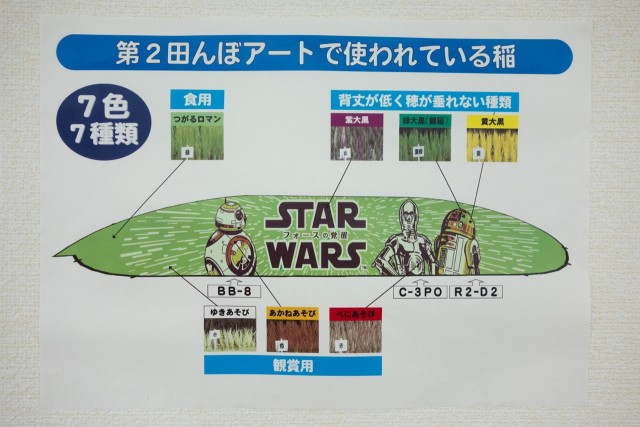田んぼアートで使われている稲