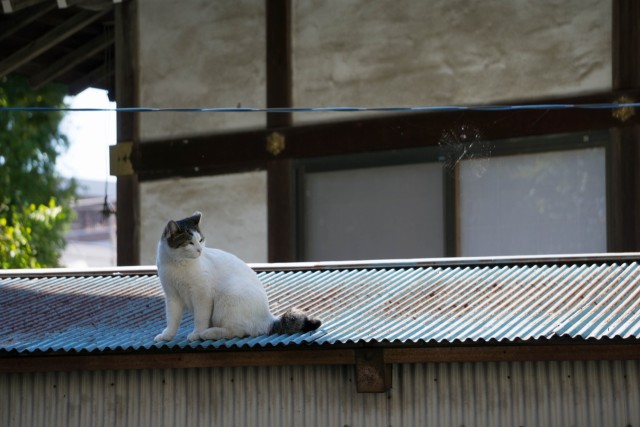 屋根の上のネコちゃん