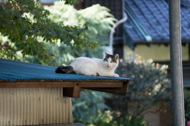 屋根の上のネコちゃん2