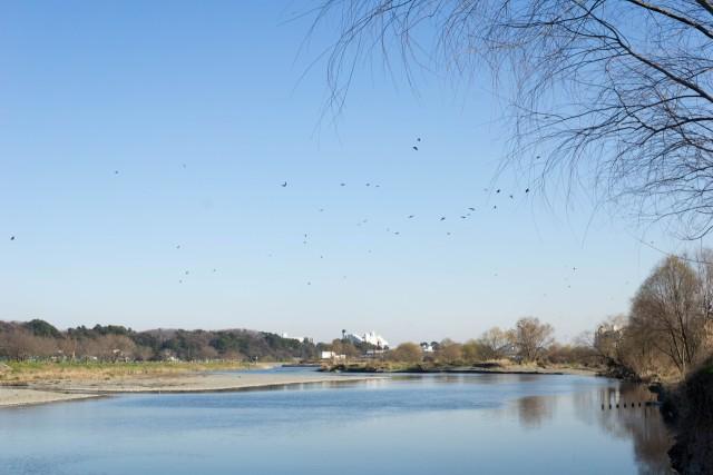 冬の多摩川