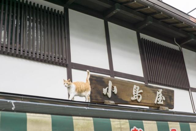 猫と小島屋の看板