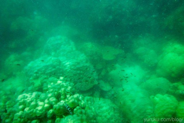 海の中は緑色