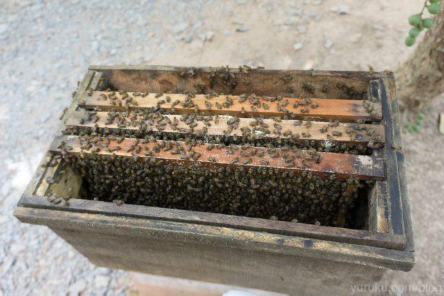 蜂の巣箱アップ