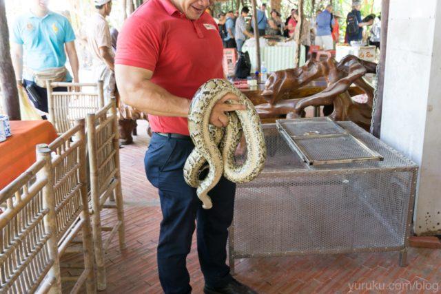蛇を首に巻ける