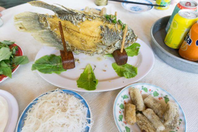 象耳魚(エレファントイヤーフィッシュ)