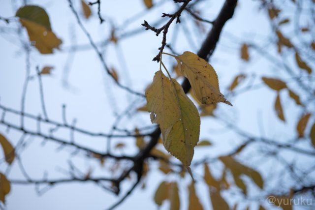 夕方の枯葉